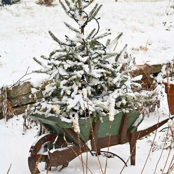 Winter Landscaping Tips:  Plan for a Winter Garden You'll Love, Add natural elements for texture, color, and beauty to your landscape this winter with our suggestions for flowers, evergreens, and attractive bark for loads of garden interest.
