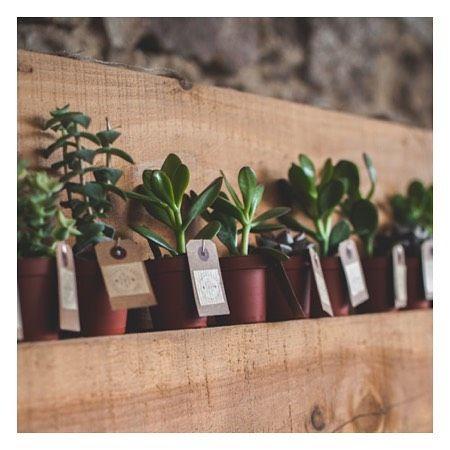 Un joli cadeau à planter chez soi!      #succulent #plante #green #igwedding #weddinginspiration #narjesleloup  #wedding #weddingplannerlyon #cadeauinvite #gift @marioncophotographe