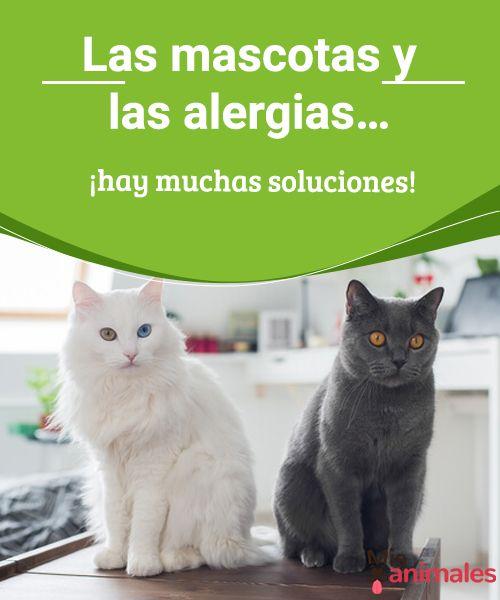 Las mascotas y las alergias… ¡hay muchas soluciones!  A continuación ahondaremos en el tema de las mascotas y las alergias, así como las múltiples soluciones que tienes para afrontar este problema. #alergias #gatos #atención #salud
