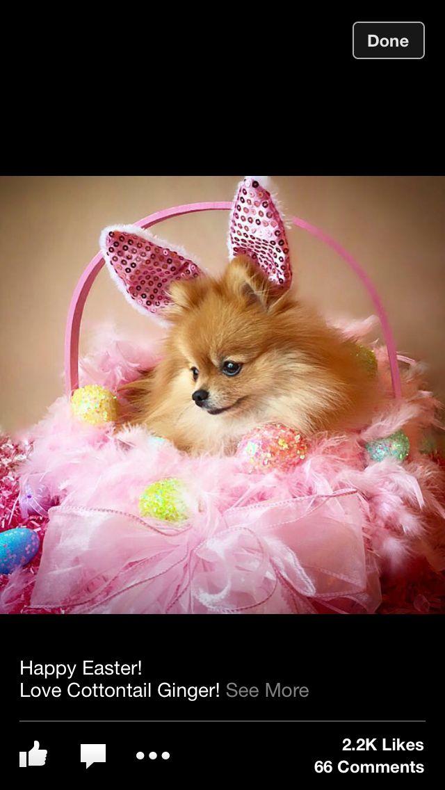 Bearish Easter Pom