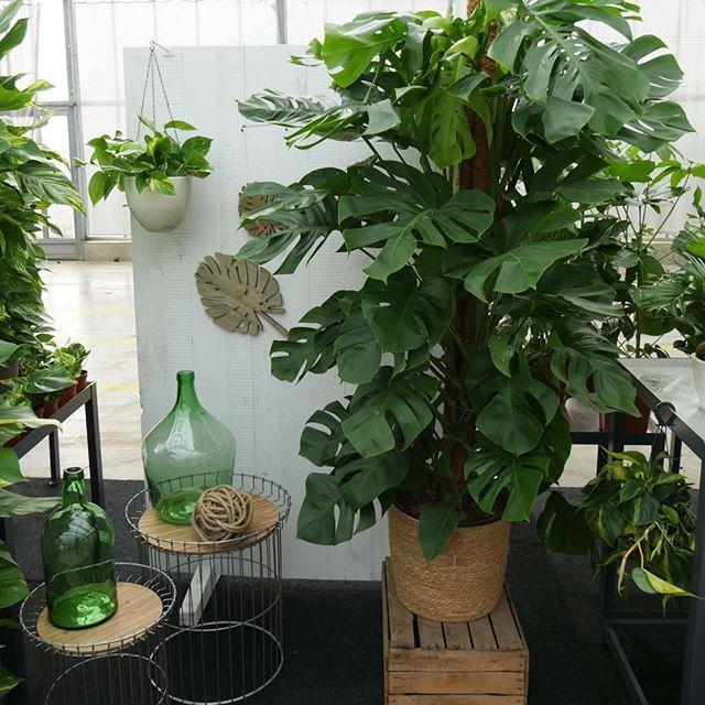 Dehner Plants Green Living Urban Living