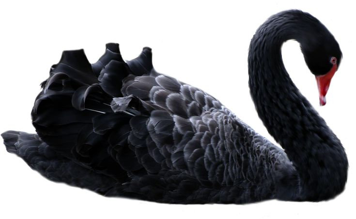 """""""The term """"Black Swan"""" was coined by University of Oxford, Saïd Business School professor Nassim Nicholas Taleb to describe high-impact events that are rare and unpredictable but in retrospect seem not so improbable. In the world of IT, black swan projects reap catastrophic effects and even result in a complete corporate meltdown."""""""