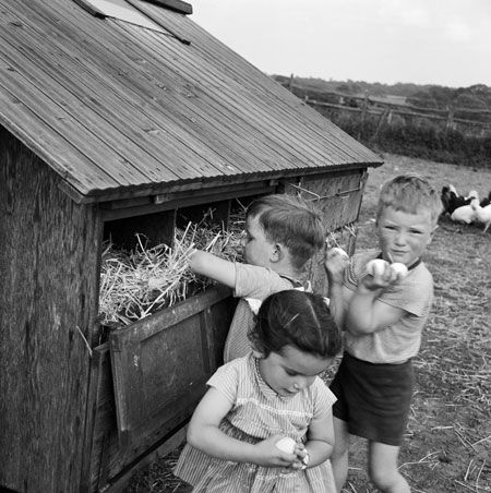 Memories of collecting eggs from the chicken coop on Grandpa's farm.    Children collecting eggs at Great Munden, Hertfordshire Photograph: John Gay/NMR Photographic Services/SDW