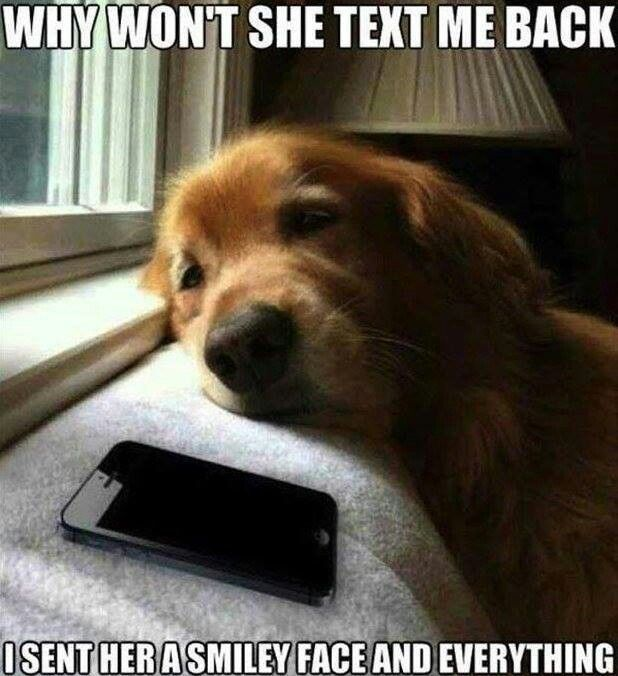Sad Puppy Meme