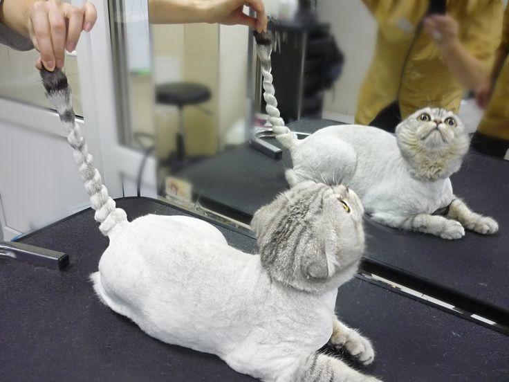 Профессиональная стрижка животных - груминг