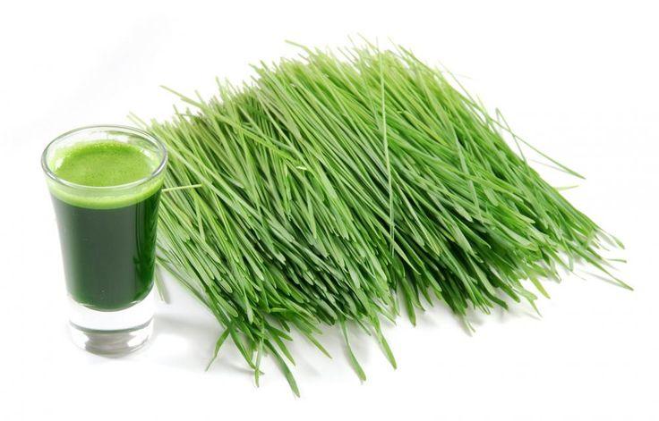 Młoda trawa pospolitej pszeniczna przeciwdziała siwiźnie, detoksykuje organizm, zwalcza guzy i napina luźną i wiotczejącą skórę.