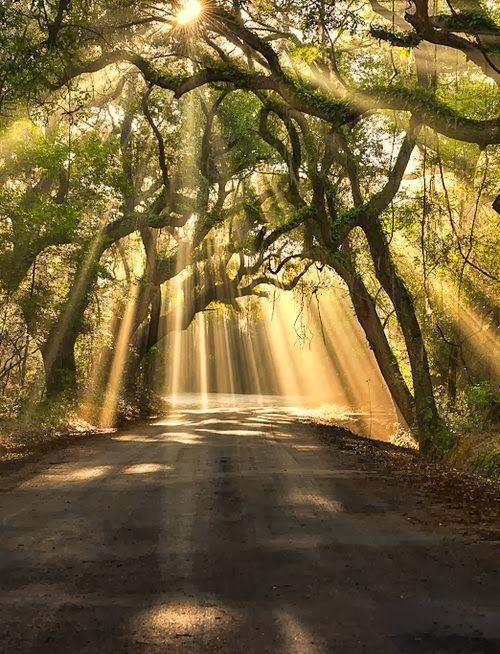 Botany Bay Road, Edisto Island , South Carolina
