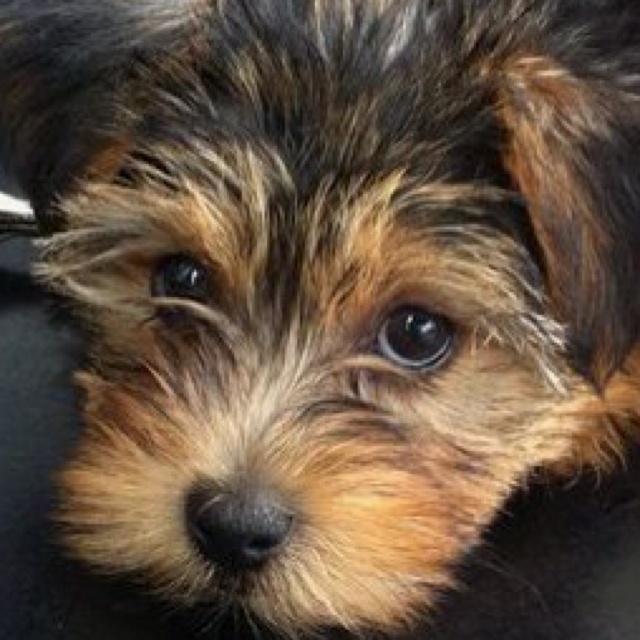 <3 Luv Bug: Puppies