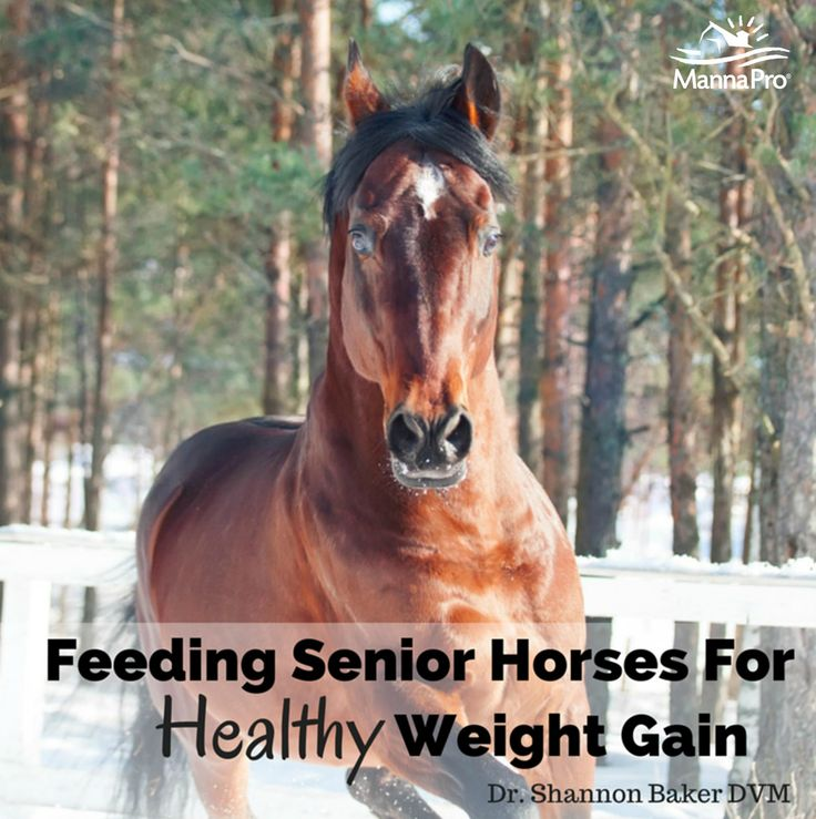 Check out these tips feeding your horse for healthy weight gain > http://info.mannapro.com/equine/feeding-senior-horses-for-healthy-weight-gain