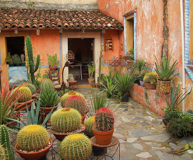 Best 25 Outdoor Cactus Garden Ideas On Pinterest Cactus Garden - cactus garden plan