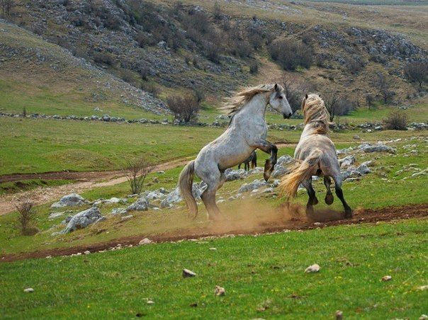 Дикие лошади, Босния и Герцеговина