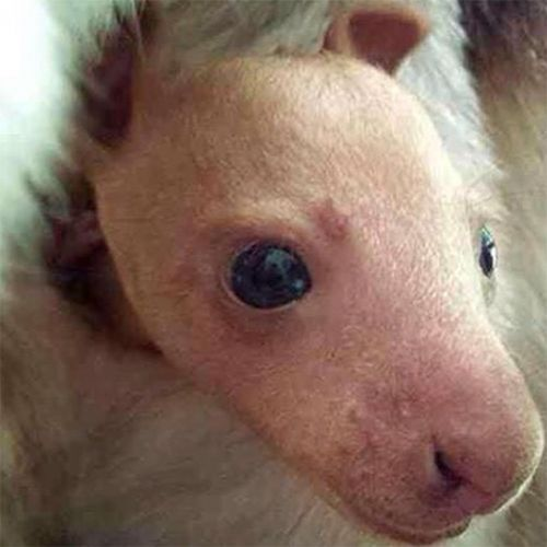 These Baby Zoo Animals Will Make Your Heart Explode With Joy