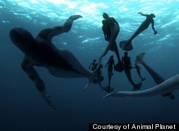 "Mermaid giving birth on an animal planet special  may 27 ,28  ""Mermaids: the body found"""