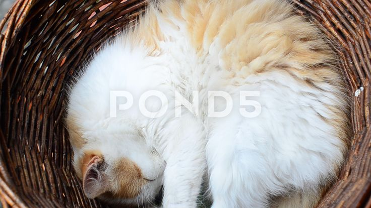 The cat sleeps in a basket. #bed #cat #pet #sleeping #kitten #adorable #animal #breed #companion #cute #domestic #dream #face #feline #fluffy #fur #furry #gray #head #indoor #kitty #little #love #lovely #lying #meow #nature #one #paw #pedigree #pedigreed #playful #portrait #pretty #purebred #purr #pussy #rest #short hair #single #soft #striped #sweet #tabby #tired #warm #whisker #white