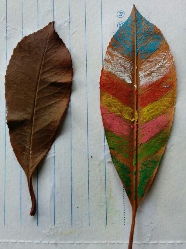 Kis yapraklari 2