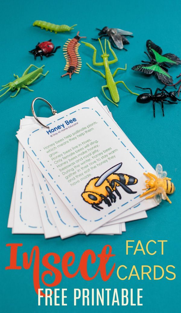 Free Printable Insect Fact Cards 6 Activities To Do With