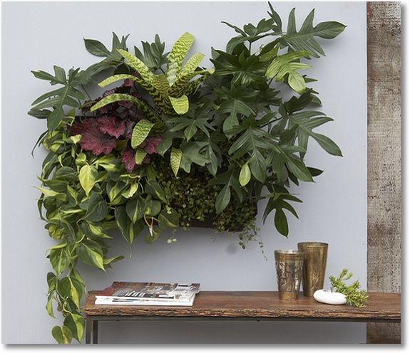 Indoor Living Wall Planter best 25+ living wall planter ideas on pinterest   vertical garden