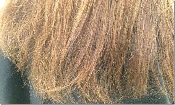 El pelo es un elemento muy importante sobre todo para la belleza de las mujeres, y tenerlo en su máximo esplendor es su principal objetivo. Al tener que luchar todos los días contra el polvo, sol, contaminación, viento y sin dejar de mencionar, los rizadores, alisadores, secador, geles, aerosoles y una variedad de productos de belleza.