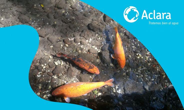 Las principales causas de contaminación: el vertido de sustancias tóxicas residuales de los procesos industriales y urbanos, que son arrojados a ríos, mares y lagos.