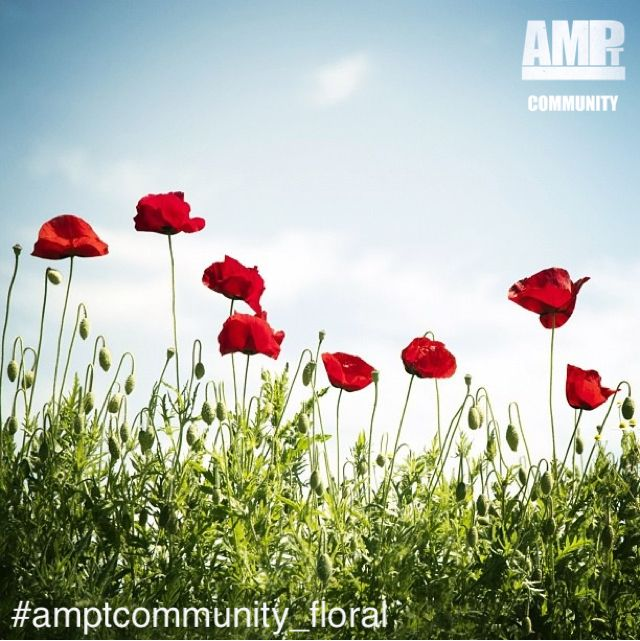 On MONDAYS we pick a new theme for the weekly AMPt Community Gallery and invite artists to share their work.  This week's gallery theme is FLORAL - #amptcommunity_floral