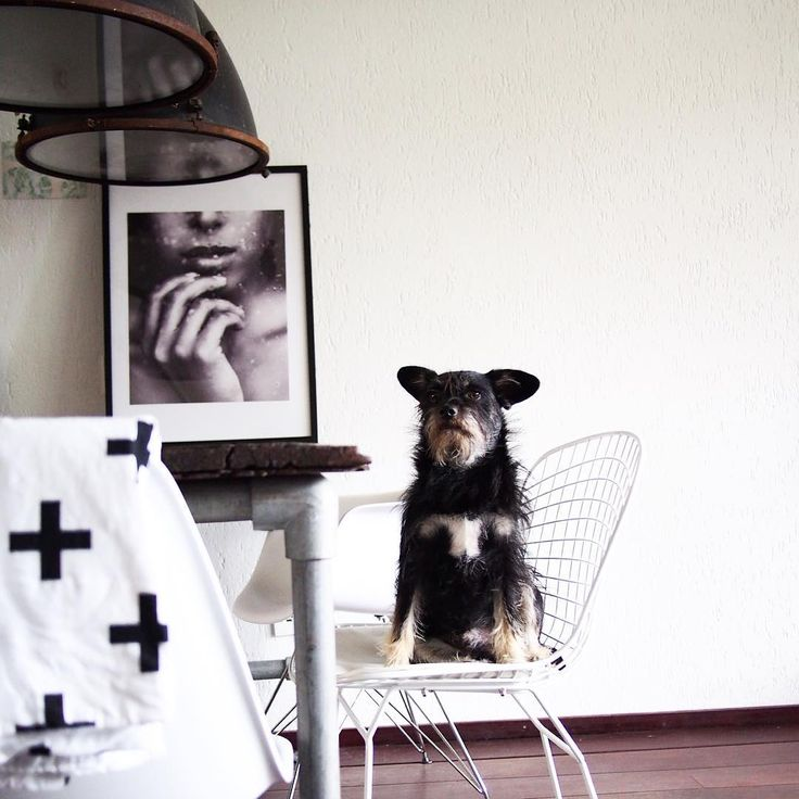#webshophomelovv #draadstaal #interior #instahome #interieur #industrieel #vintage #dog#hond#viamartine #vintagelab15