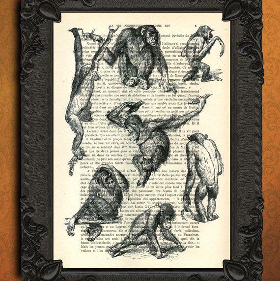 Monkeys art print monkey illustration antique book page monkey study page poster by MadameMemento on Etsy https://www.etsy.com/listing/103446818/monkeys-art-print-monkey-illustration