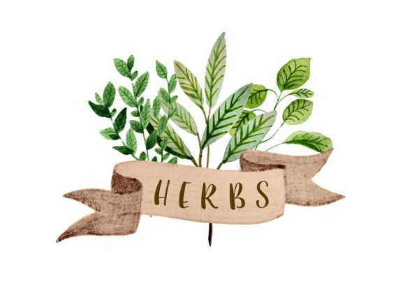 Herbs clipart watercolor botanicals clipart gardening by rosabebe