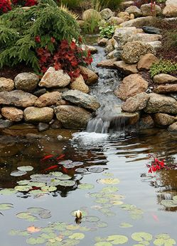 Small waterfall into pond with fish...