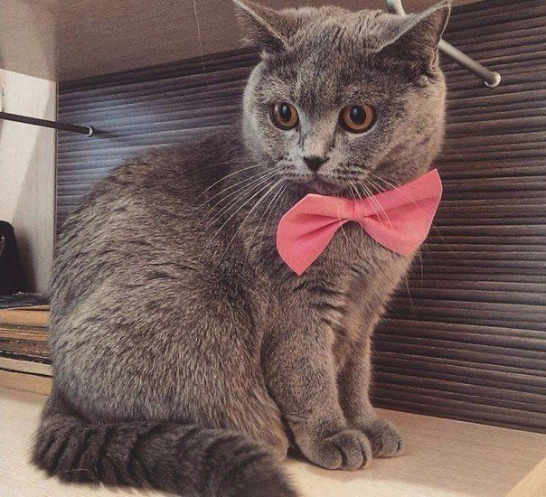 35 Cutest Cat Pictures You Will Ever See Cute Animals Funny Cat Pictures Cute Cats