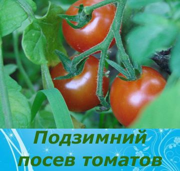 4121583_mozhnolisejatpomidorypodzimu_1 (360x343, 60Kb)