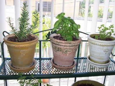 Indoor Herb Garden: How To Have An Herb Garden Inside - When you grow an herb garden inside, you can benefit from enjoying fresh herbs year round. In order to be successful at growing herbs indoors, follow a few simple steps. Keep reading to learn how to grow herbs indoors successfully.