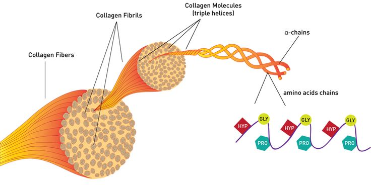 The Collagen Question