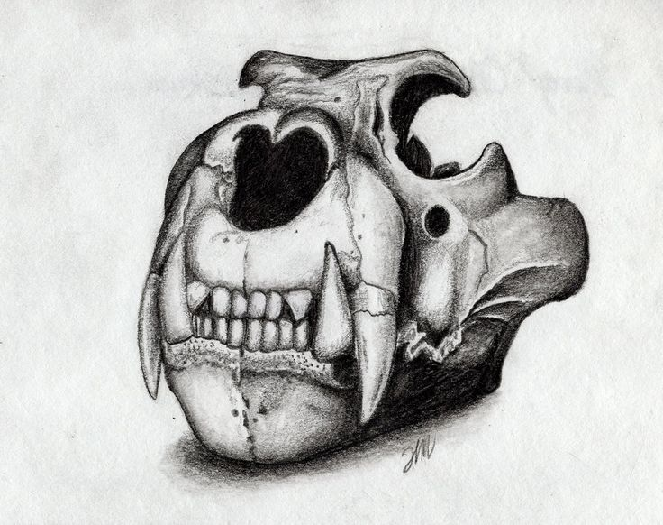 Lion skull drawing google search cat pinterest for Lion skull tattoo