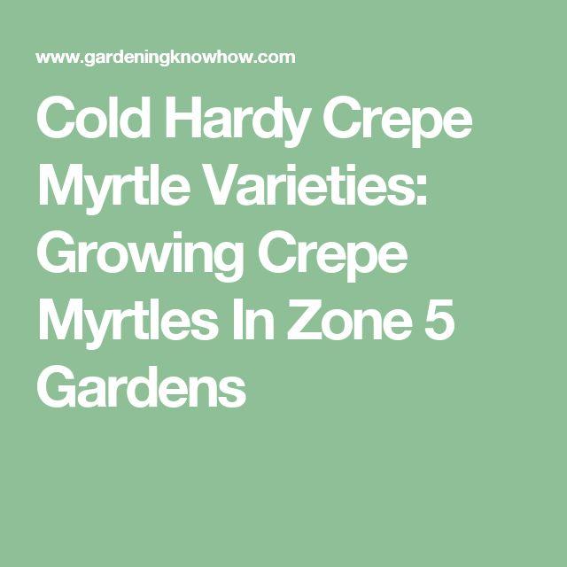 Cold Hardy Crepe Myrtle Varieties: Growing Crepe Myrtles In Zone 5 Gardens