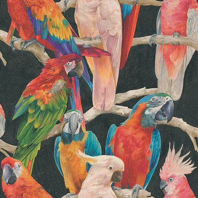 Parrots Multi wallpaper by Albany