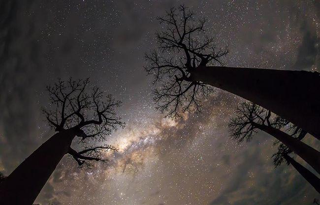 A hónap asztrofotója: Tejút a baobabfák között - National Geographic