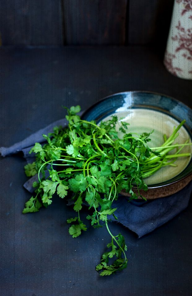 Coriander leaves, a king of herbs. essential flavour...