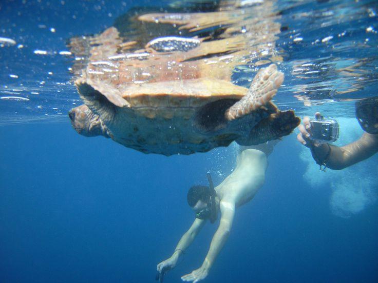 Nager à côté d'une tortue lors d'une sortie pour nager avec les dauphins à partir du bateau Cala Rossa