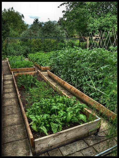 Vegetable Garden by busb, via Flickr