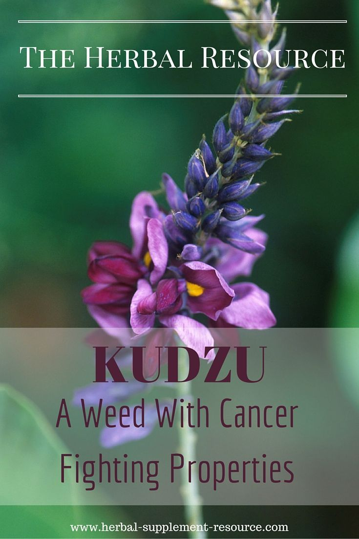Kudzu - Information on the health benefits, traditional uses, therapeutic substance, dosages and side effect of the medicinal herb kudzu (Pueraria lobata)