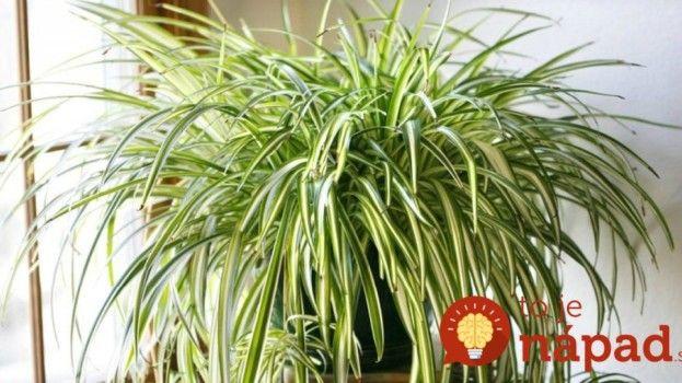 Túto rastlinu sa rozhodne oplatí mať doma, dokáže divy!