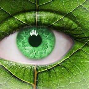 Знаете ли вы, что вы можете защитить ваши глаза от вредных солнечных лучей, кушая соответственные фрукты и овощи? Узнайте, как можно заботиться о ваших глазах.