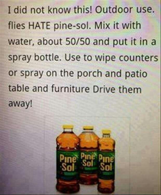 25+ Unique Keep Flies Away Ideas On Pinterest | Flies Repellent Outdoor,  Gnat Spray And Gnat Repellant