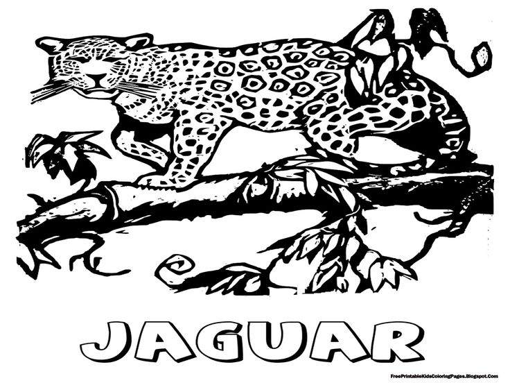jaguar animal coloring pages 1 - Kids Coloring Animals