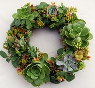 Do You Love Succulents? I Do! : Life as Lou