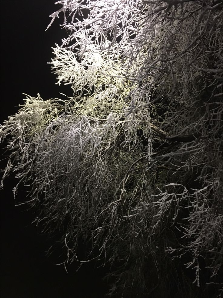 Hoar frost magnificently illuminated by a street light at midnight.  http://thebestrate.ca