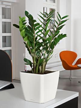 Zamioculcas natural herbs in pots shiny Lechuza Quadro  http://www.robertorossi.ro/amenajari-interioare-apartamente/