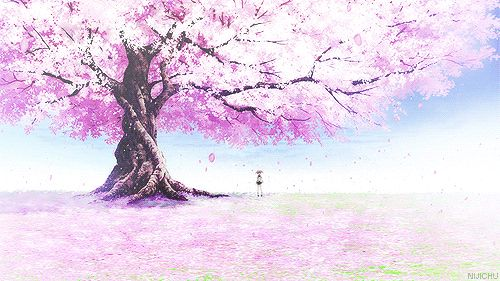 cherry blossom tree anime GIF | Anime Scenery | Pinterest ...