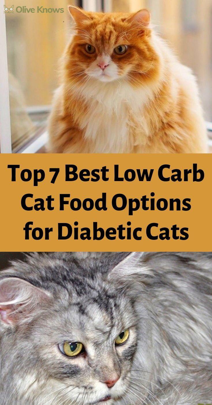 Top 7 Best Low Carb Cat Food Options For Diabetic Cats Oliveknows Cat Food Diabetes Cat Cat Health