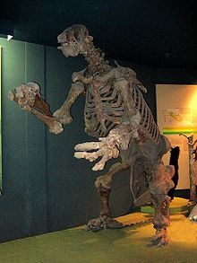 The Giant Ground Sloths: The giant ground sloth is believed to have weighed about 2.5 tonnes, the same as an Asian Elephant! Their fossils have been found from Patagonia to Alaska. The last ground sloths seem to have died out about 10,000 years ago. Saw this skeleton in the National Museum of Natural History in Washington DC when I was a kid. Must see!!!